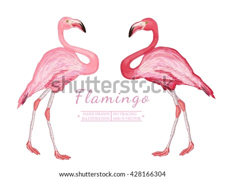 two flamingo isolated on white
