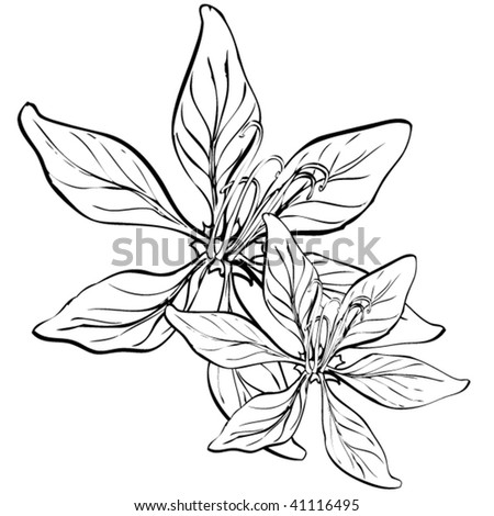 Drawings Of Flowers In Black And White Flowers black and white