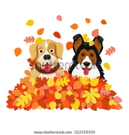 two funny dogs playing in an