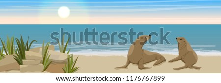 two fur seals on the sandy