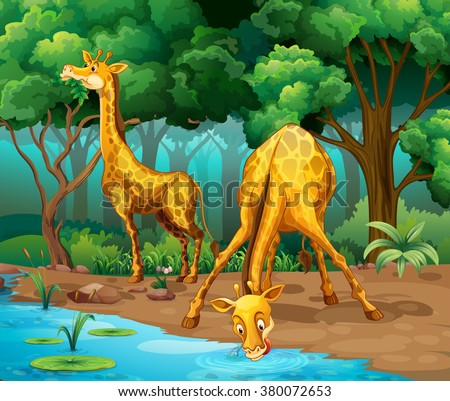 two giraffes living in the