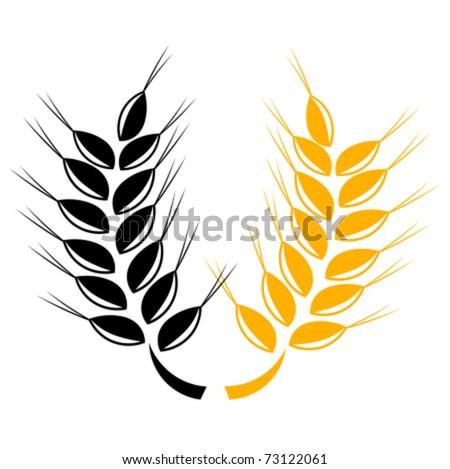 Two grain ears over white. Vector illustration
