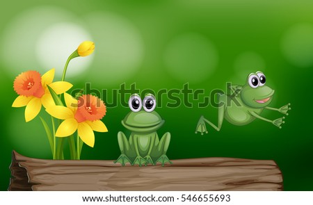 two green frogs on the log