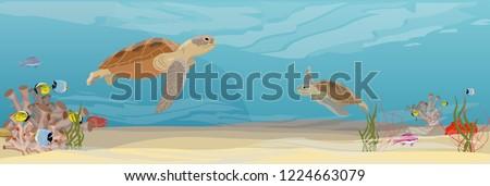 two green sea turtle swimming