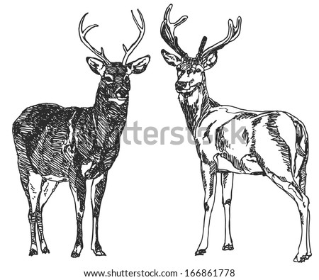 Two hand drawn deers Sketch drawing illustration vector