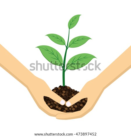 two hands holding young plant