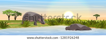 two hippos in the savannah
