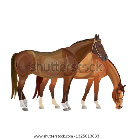 two horses grazing vector