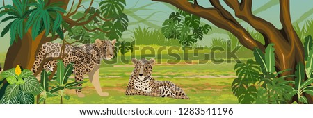 two jaguars in the jungle big