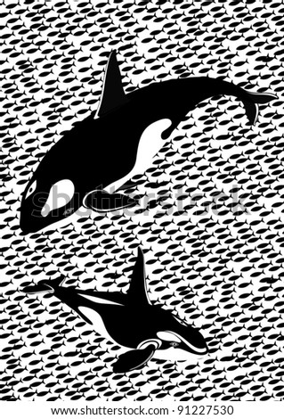 Two killer whales against the schools of fish. Black and white illustration.