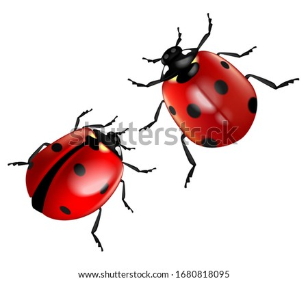 two ladybugs isolated on a