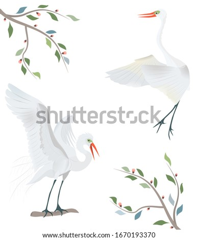 two large white herons with