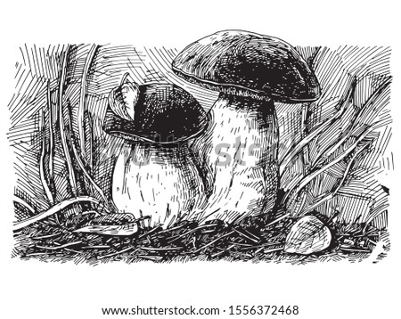 two large white mushrooms grow