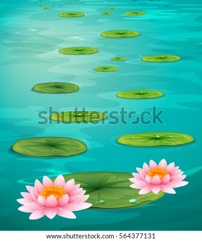 two lotus flowers and leaves on
