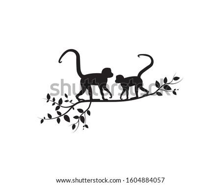 two monkeys on branch  vector