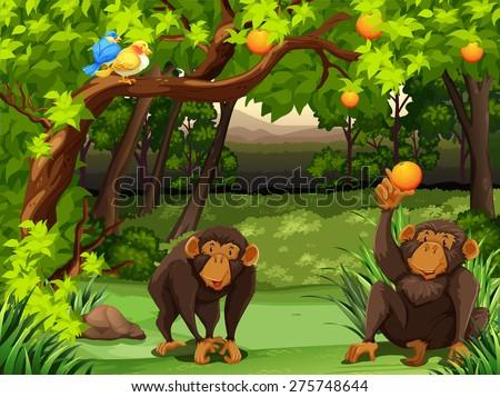 two monkeys sitting under