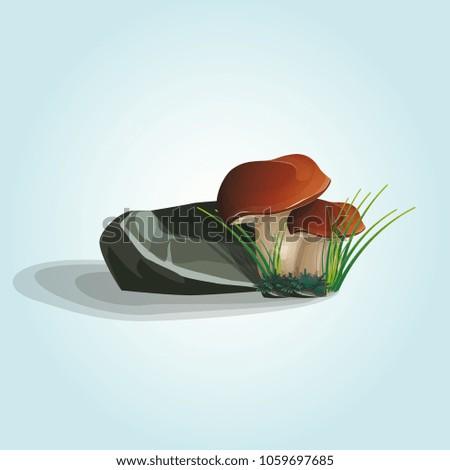 two mushroom growing under a