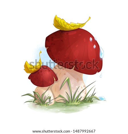 two mushrooms boletus in the