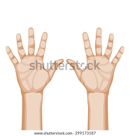 two palms vector illustration