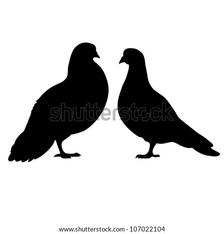 Two pigeons love silhouettes