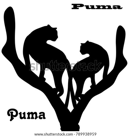 two pumas on tree  silhouette