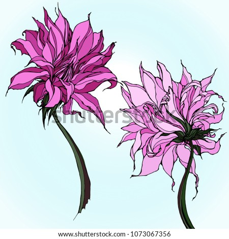 two realistic dahlia flowers
