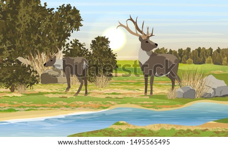 two realistic red deer with