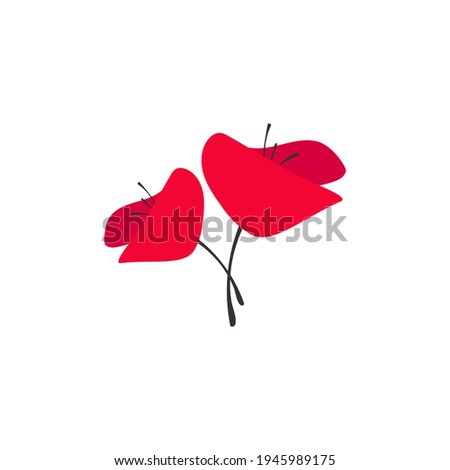 two red poppy flowers isolated