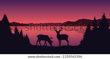 two reindeers by the lake