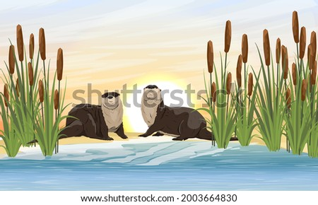 two river otters sit on the