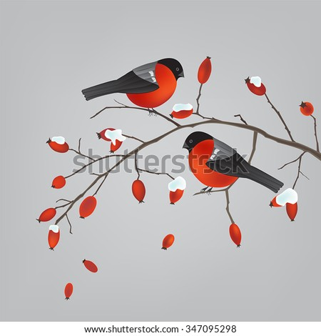 two robins on a wild rose hips