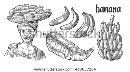 Two single and bunches of fresh banana with leaf. African woman carries a basket with fruits on her head. Vector black vintage engraving illustration isolated on white background. For menu, web, label