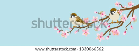 Two small birds perch on cherry blossom branch -House Sparrow, Header ratio