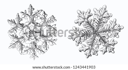 two snowflakes isolated on
