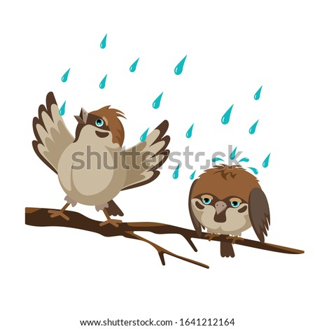 two sparrows on a branch one