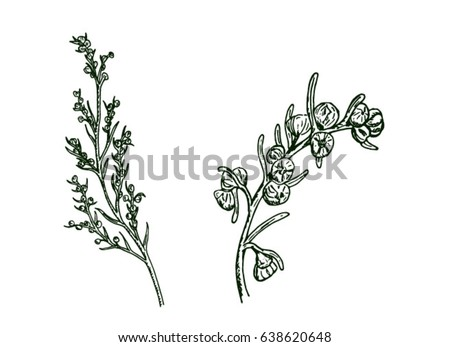 two sprigs of wormwood