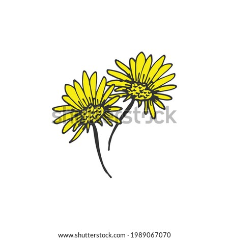 two sunflowers illustration on