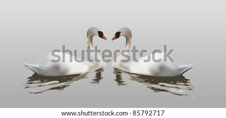 Two swans forming a heart with their necks, symbol of love