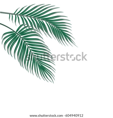 two tropical palm leaves