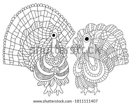 two turkey birds vector