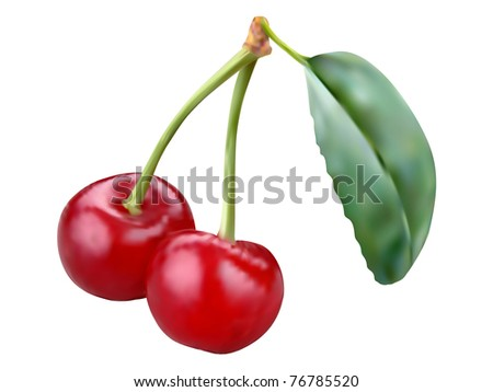 Two vector cherries illustration on the white background