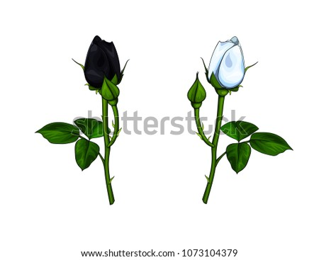 two vector closed roses   black