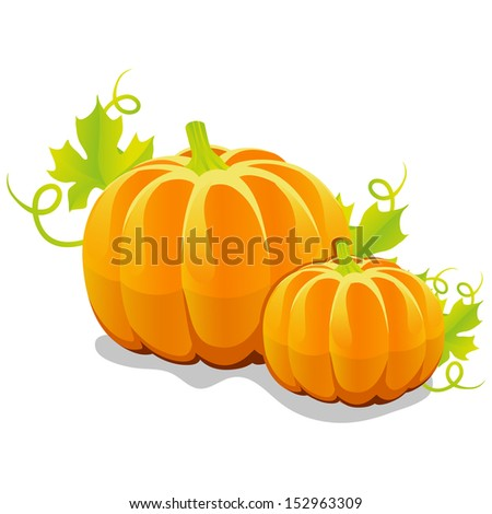 two vector pumpkin on a white