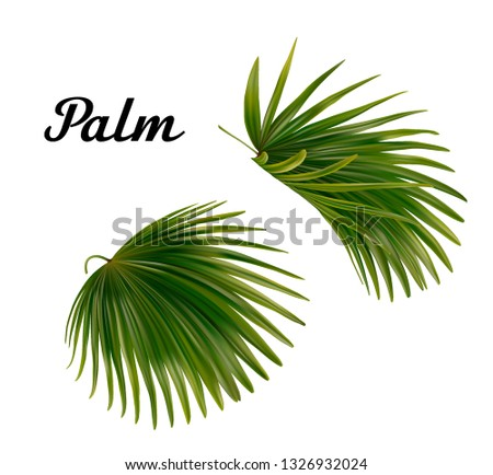 two vector realistic palm