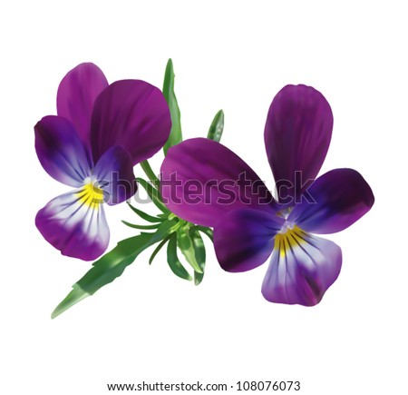 Stock Photo Two violet pansies with leaves isolated on white. Photo realistic vector illustration