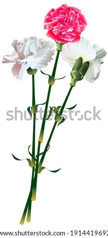 two white and one red carnation