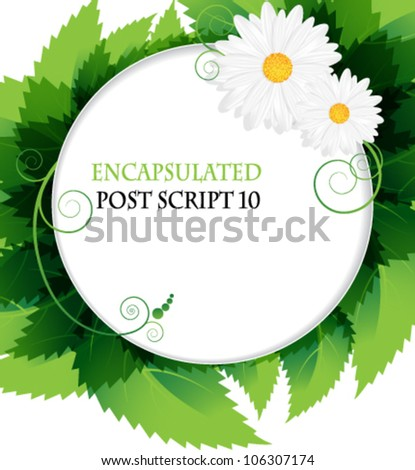 Two white daisies and lush green foliage background - stock vector