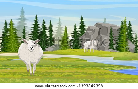 two white fluffy sheep in a