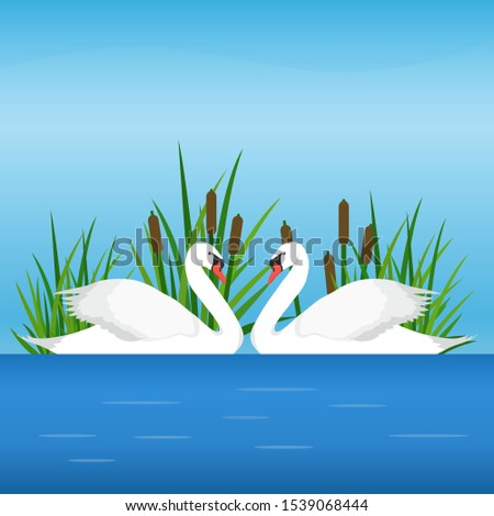 two white swan on the lake