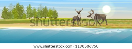 two wild reindeer on the coast